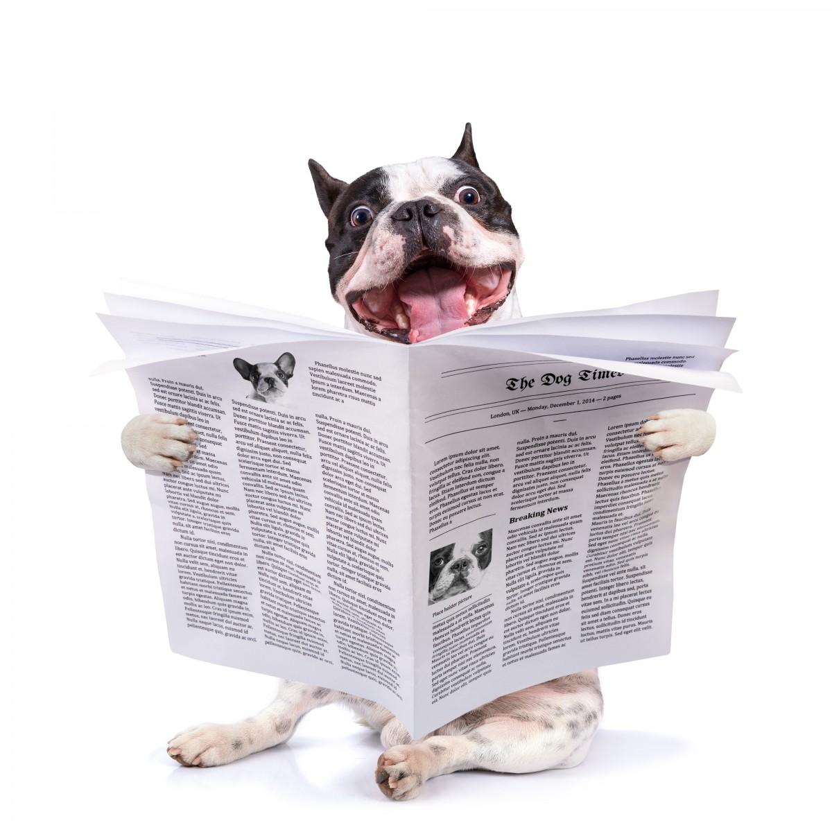 Dog Grooming Reading